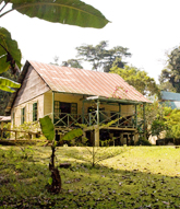 Bobiri Forest and Butterfly Sanctuary