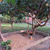 Our garden at the Sunbird Lodge in Accra
