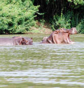 Wechiau Community Hippo Sanctuary